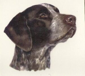 German Shorthaired Pointer Design Coffee Mug - NEW -  Choice of 9 Designs L@@K