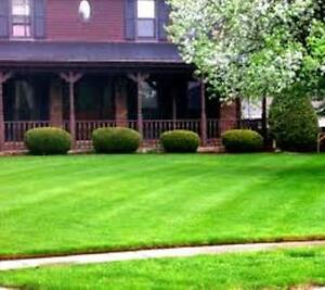 Quality Lawn Cutting, Lawn Edging, Hedge Trimming Services Kitchener / Waterloo Kitchener Area image 1