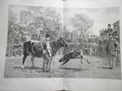 Antiquarian Print: A Sale of Shorthorns-1889-Cattle Farming/Victorian Art/Cows