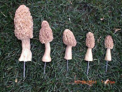 Morel Mushrooms Figurines