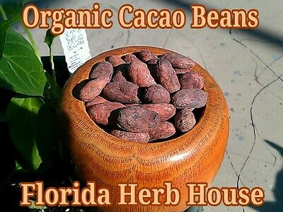 Organic Whole Cacao Beans - 16 Oz (1 Lb) - Buy Our Best Cacao Beans Online