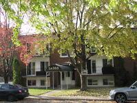 Appartement 1½ à louer - disponible immédiatement