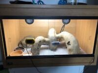 2' vivarium suitable for small reptiles. FULL SET UP INC UV LAMP AND HEAT MAT