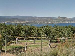 Amazing Vineyard/Orchard property with building potential
