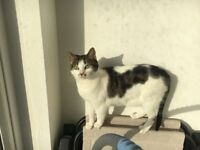 A very lovable cat looking for a very loving owner