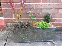 Trough planter