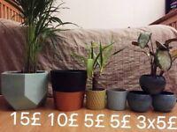 Flower ceramic vintage pots