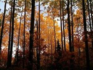 Recherche terre à bois