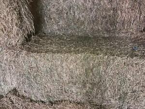 good quality hay