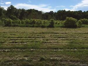 Nice 2 acre lot at Manitoba Lake/ Amarnth