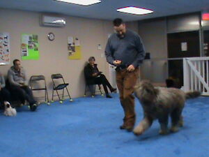 BASIC OBEDIENCE AND PUPPY CLASSES