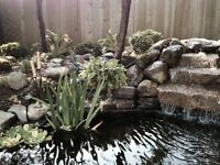 Can you spot the fake rock around this water garden?