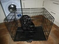 Dog cage in good condition.