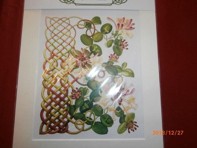 Rachel Arbuckle Irish Celtic Flora Print Ready to be framed