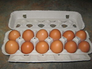 de beaux œufs brun de jeunes poules