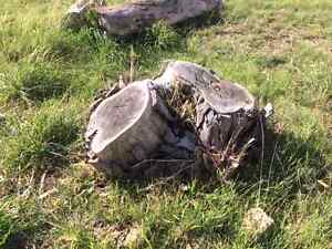 Cheapest Stump Grinding Service Perth Perth City Area Preview