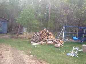 All this Campfire Firewood + another dry tree all cut into logs