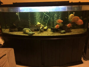 150 gal bow front (7ft long)