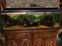 90 Gallons Aquarium on Custom Pine Cabinet