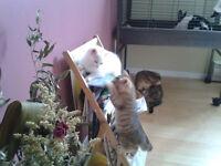 2 chatons de 7 semaines à donner