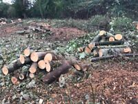 Firewood free to collect
