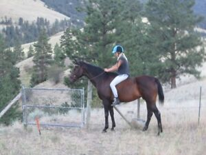 Reg. TB mare with tack
