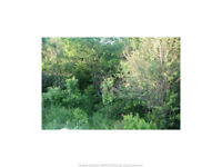 23+ Acre wooded Lot in Saint Charles NB