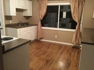 Newly renovated 3 bd house in quiet, beautiful area for rent