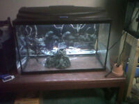 fish tanks for sale.