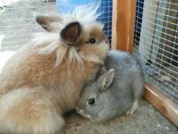 Lost grey rabbit in ip3 area