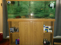 55 gallon fish tank and stand with lights 175.00