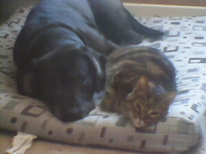 ANIMALS ARE AWESOME--PET SITTING-CATS,DOGS,WHATEVER