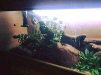 4ft Vivarium for snakes/geckos and lizards