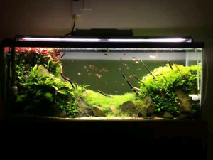 LOOKING FOR 55 GALLON TANK