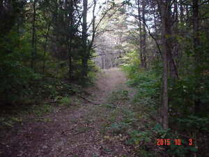 looking for privacy ?Perfect to put your trailer / cabin on Gatineau Ottawa / Gatineau Area image 6