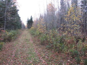 Great Investment!  303 Acres off Cape Breton Road