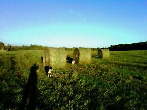 100-800 lb round bales, suitable for Cattle, Sheep, Goats, Llama