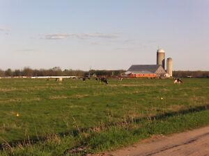 AGRICOLE/TERRAINS A VENDRE