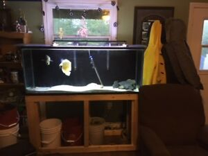 120 gallon Fish Tank with DIY  Stand For Sale
