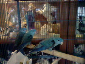 9 LOVELY LINNIES: Cobalts and 3 shades of Green