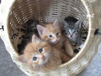 2 amazing cute kittens left, MUST SEE!! UPDATED.. GINGER IS GONE !!
