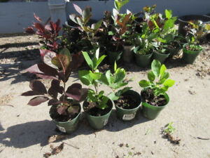 Young Potted Trees + Plants