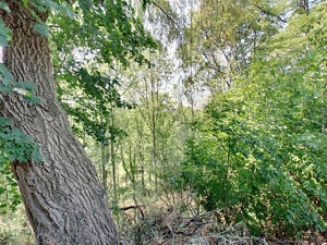 Conservation View Land/Building Lot