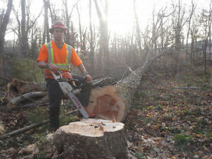 Abattage arbres - bucheron