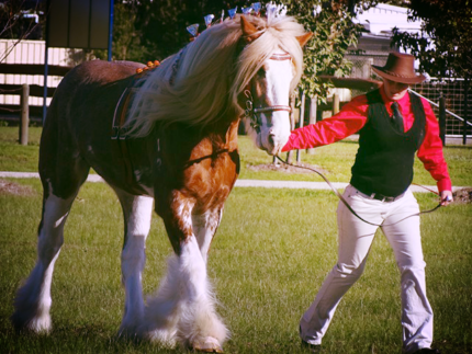 Clydesdale Foal For
