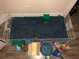 2 Male Guinea Pigs to GOOD home