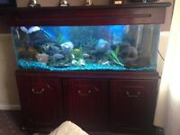 Fish Tank, Hood and Stand