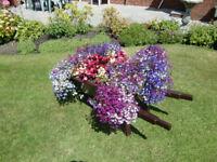 Garden Planter Flower Barrow