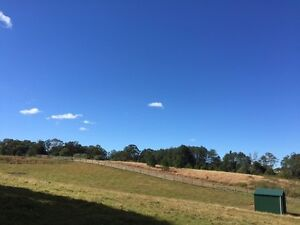 Horse Agistment Offered: Sunshine Coast Hinterland Palmwoods Maroochydore Area Preview