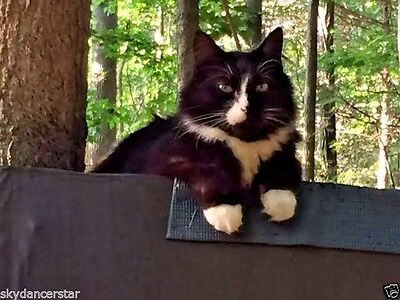 In Memory Of Sebastian Bear Rainbow Bridge Cat Rescue Donation Rec Photo